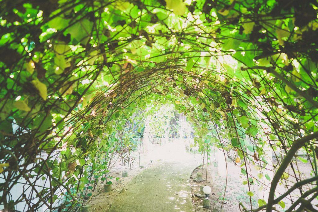 Beautiful garden walkway
